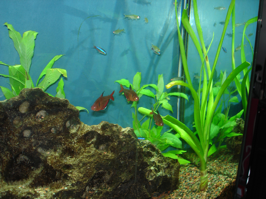 Aquarium heaters recalled by petsmart for electric shock for Cloudy water in fish tank solutions