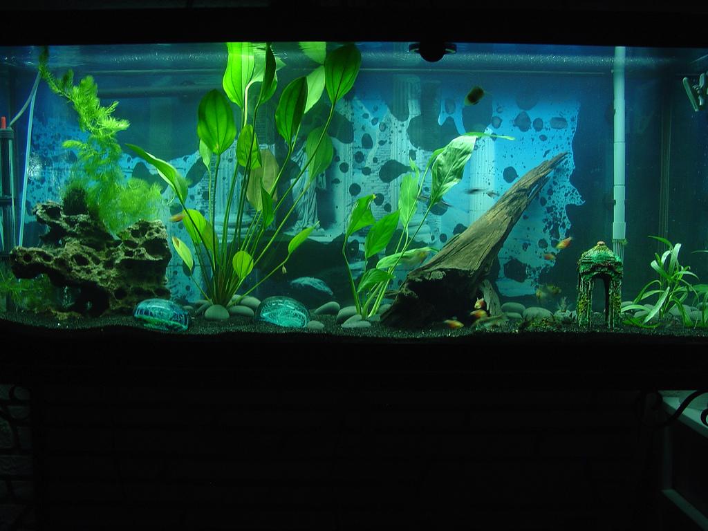 Freshwater fish for aquarium petsmart - Petsmart Recalls Fish Tank Heaters In Compliance Magazine