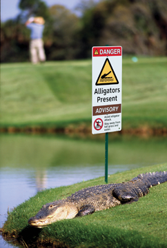 alligator signs and your warnings in compliance magazine