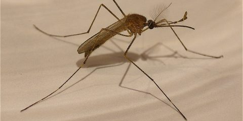 New Method to Test for Malaria   In Compliance Magazine