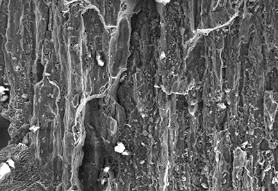 SEM close up of fracture surface