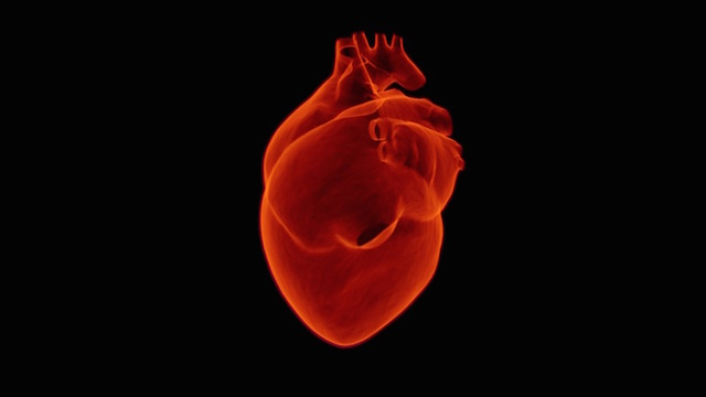 heart patches made of beating cells could one day restore cardiac function in compliance magazine structure